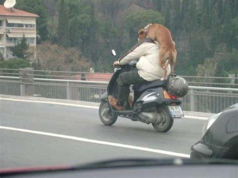 Motorrad Fahren Mit Hund by Hund Spazierenfahren Bilder Auf Bildschirmarbeiter