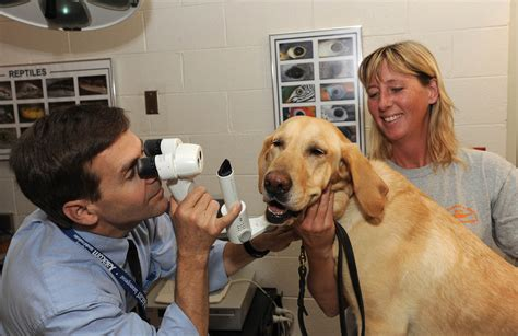 puppy vet how to make your pet feel more comfortable at the vet animal hospital of nashua