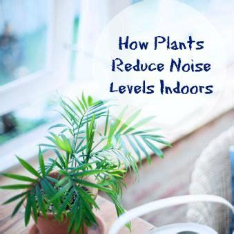 how to reduce noise in a room how plants reduce noise levels indoors greener on the inside diy home remedies