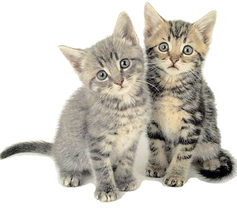 imagenes increibles de gatos collares impresos en 3d que traducen el lenguaje de los