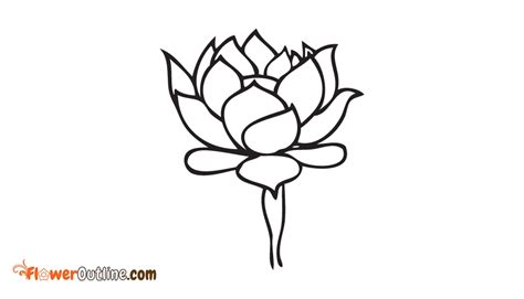 outline of lotus flower lotus flower outline lotus outline images pictures