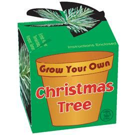 grow your own christmas tree kit gadgets and gizmos