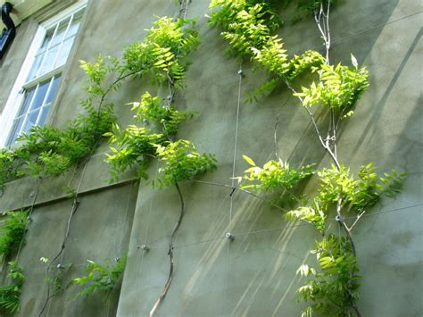 climbing plant support systems exles of wire trellis and green walls in place s3i