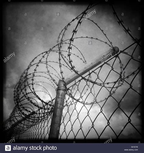 barb wire fence black and white www pixshark