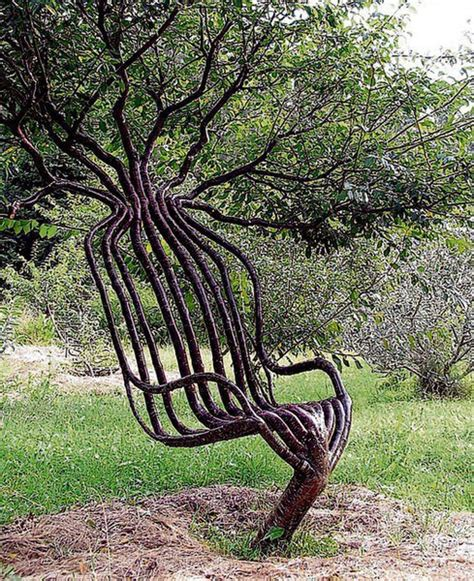 a living tree a chair from a living tree pictures images photos
