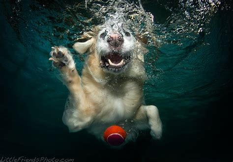 can all dogs swim the gallery for gt swimming underwater
