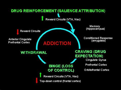 Does Heroin Detox Work by What Is Hydrocodone Used For