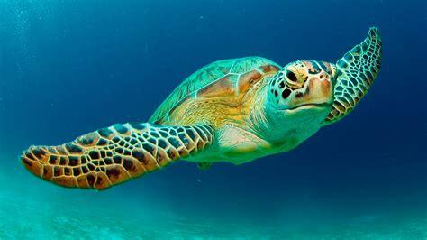 Day 5 Turtles by Cyprus Coastal