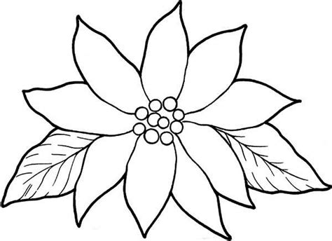 Blooming Poinsettia Coloring Page Color Luna Poinsettia Coloring Page