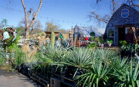 tillery street plant company  east austin succulents