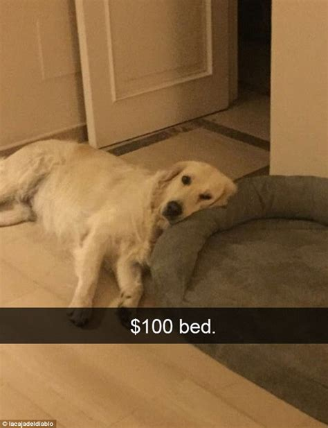 brings puppies to owner the funniest snapchats are revealed daily mail