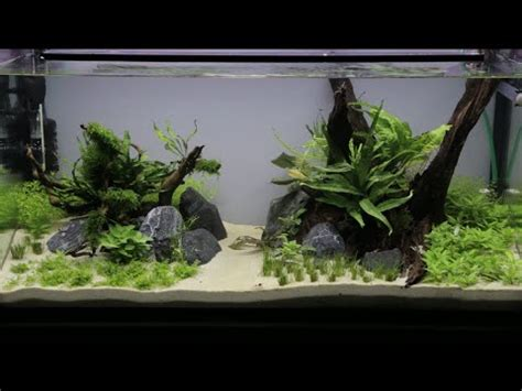How To Set Up An Aquascape by 112l Aquascape Set Up Asurekazani