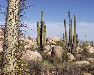 desierto de baja california wikipedia, la enciclopedia libre