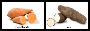 yam sweet potato difference probrains org