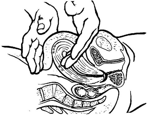 massaging uterus after c section fourth stage of labor recovery stage