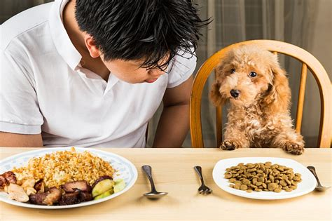 is feeding people food to pets ethical safety tips for feeding dogs human food pet care facts