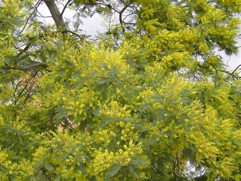 yellow flower wallpaper uk tree yellow flowers uk 11 cool hd wallpaper