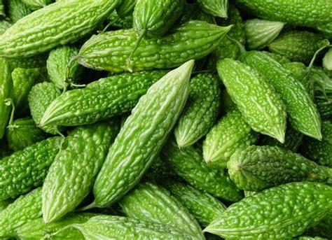 Bibit Pare jual benih bibit sayur pare eceran cocok untuk dataran