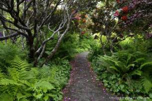 Pictures Of A Garden Dynamics Of Light And Shade Garden By The Sea