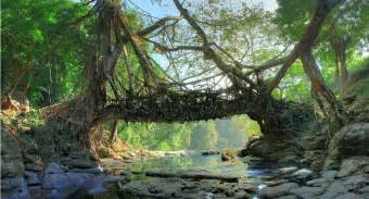 living bridges mawlynnong itinerary location things to do at asia s cleanest village tripoto