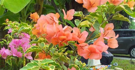 na lovely kitchen bunga kertas daun batik