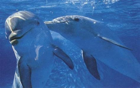 google images dolphins cute dolphins google search dolphins pinterest