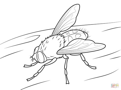 fly fishing coloring pages coloring pages