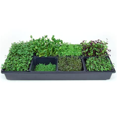 indoor garden kit sectional hydroponic microgreens growing kit grow indoor