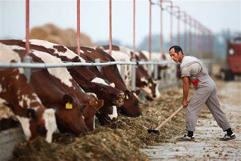 in russian how to open a farm in russia if you re a foreigner russia beyond