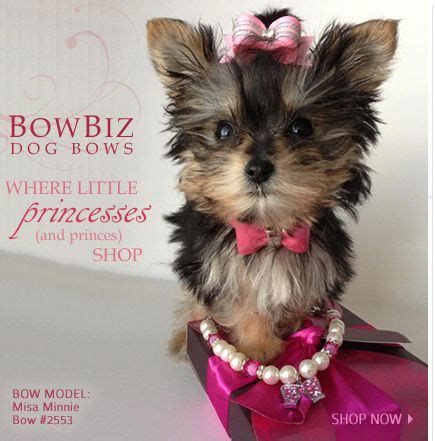 how to make yorkie hair bows bows quality bows yorkie maltese shih tzu by bowbiz animal