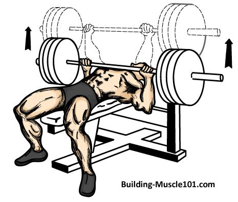bench press work out the bench press exercise