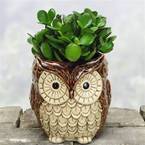 owl home decorations 50 owl home decor items every owl lover should have