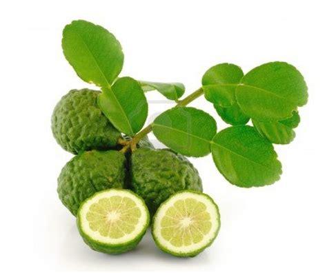 kaffir lime leaves a tangle of thyme