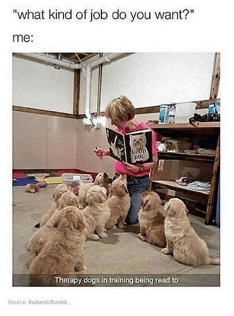therapy dogs career what of do you want me therapy dogs in being read to source