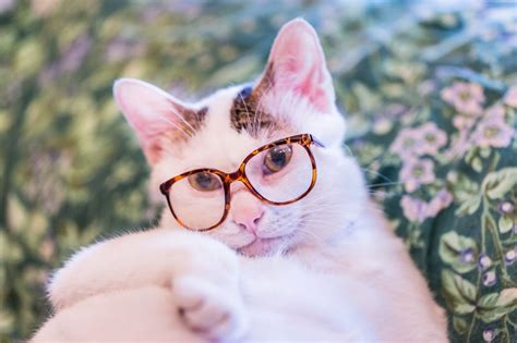 wallpaper cat 3d glasses white cat with glasses wallpapers and images wallpapers