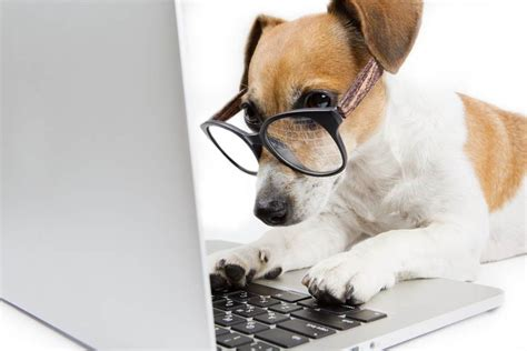 safe meds for dogs is it safe to buy pet medication safebee