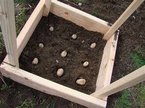 potato planter box potato box april farm challenge 2 the spokesman