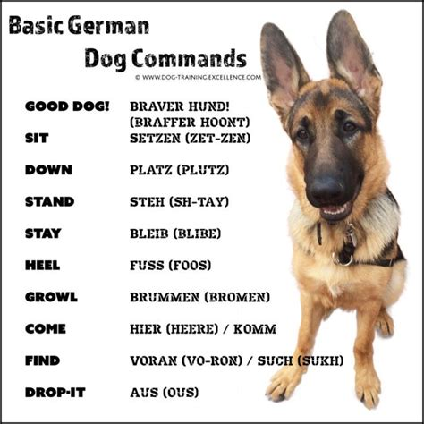 german words for dogs 21 german commands to your