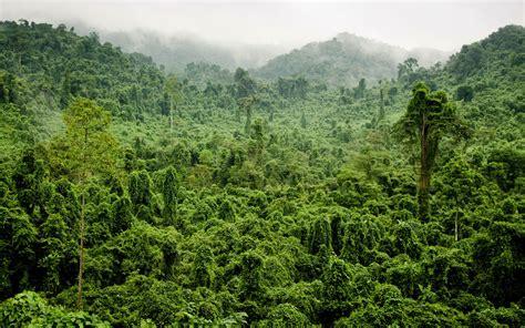 Tropical Jungle tropical jungle wallpaper nature and landscape