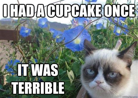 Cupcake Meme - i had a cupcake once it was terrible cheer up grumpy cat