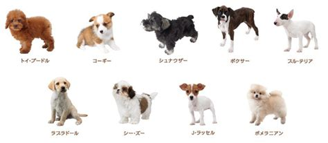 japanese puppy japanese breeds breeders guide