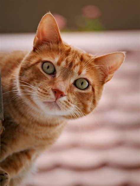 cat picturs cat free stock photo cat up 17885
