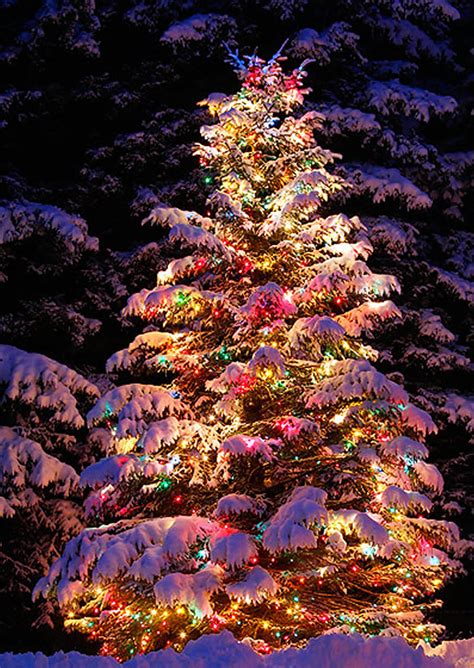 christmas light tree designs 22 best outdoor tree decorations and designs for 2019