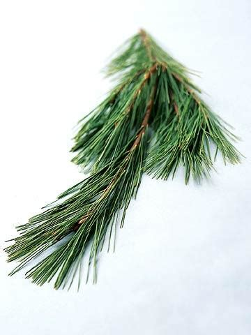 9 favorite christmas trees midwest living