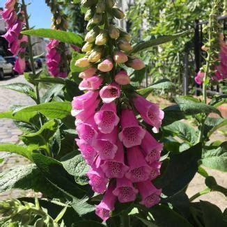 Garten Giftige Pflanzen by Aufgepasst Giftige Pflanzen Im Garten Bimmelbommelei De