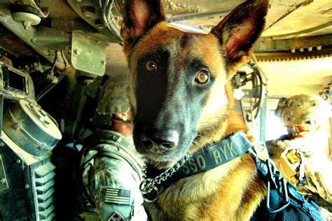army handler new bill would retire dogs with their handlers