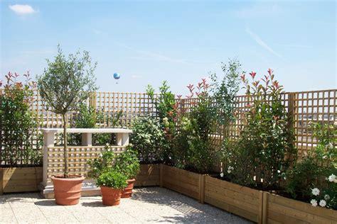 piante da vaso piante vaso piante da terrazzo