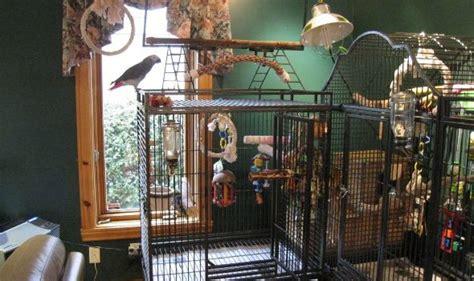 Build House Online bird room design considerations hari