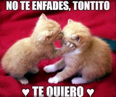 imagenes lindas de amor de gatitos gatos tiernos con frases bonitas de amor