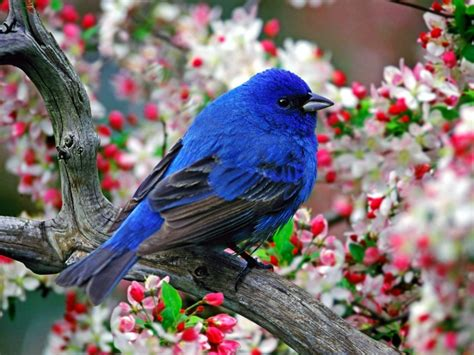 sun shines beautiful blue bird wallpaper